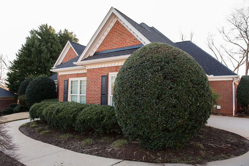 Hedge Trimming and Shrub Pruning