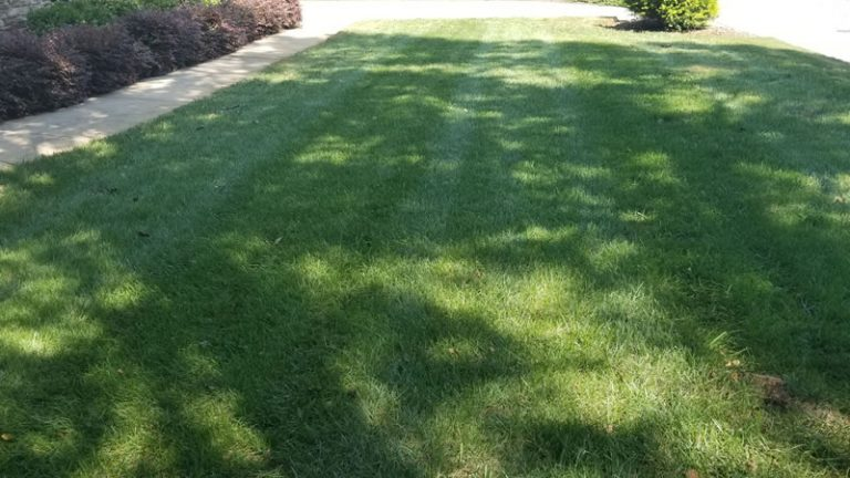 Give Your Lawn a Good Spring Cleanup